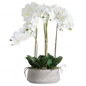 Large White Orchid in Wide Stone Pot