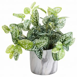 Variegated Nerve Plant in Marble Effect Pot