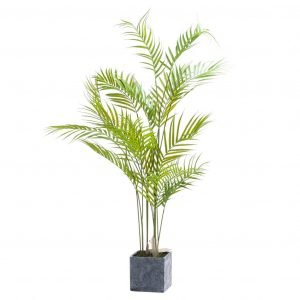 Paradise Potted Palm