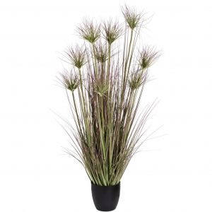 Medium Potted Water Bamboo Grass