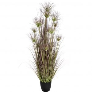 Large Potted Water Bamboo Grass